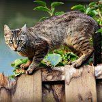 Ahuyentador de gatos