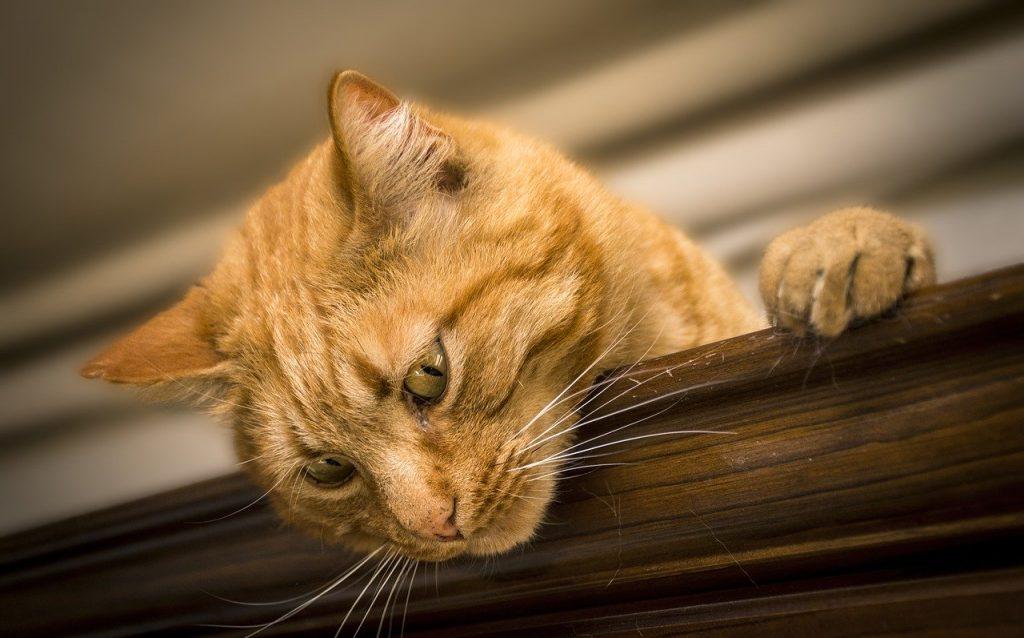 Repelente para gatos