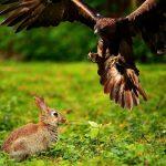 Trampas para conejos