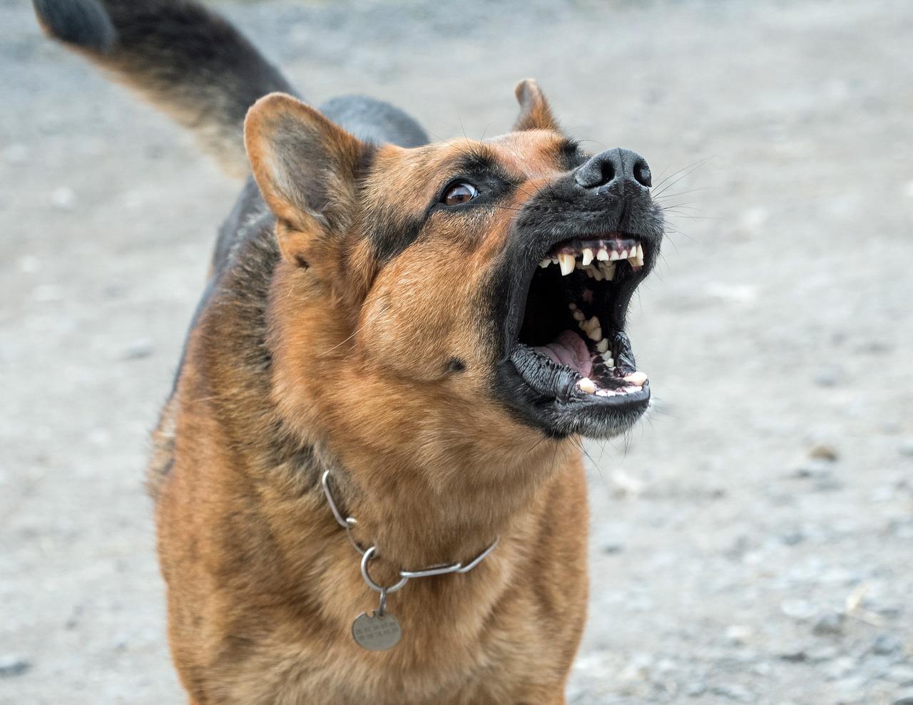 ahuyentador de perros