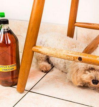 Repelente para perros