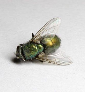 repelente moscas