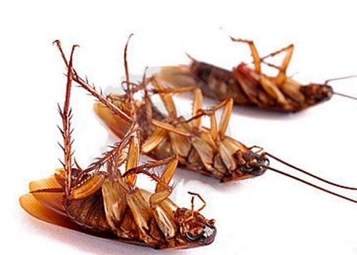 Repelente cucarachas