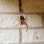repelente arañas