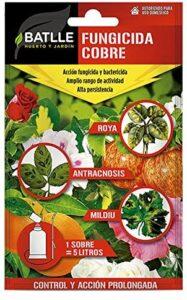 plantas afectadas por hongos